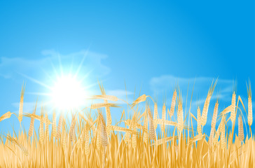 Abstract summer landscape with cornfield, sun and clouds