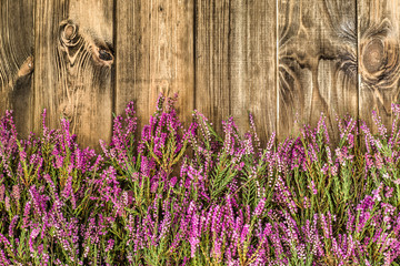 Heather flowers on rustic wood background