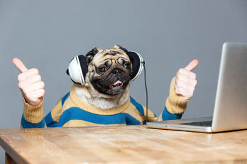 Pug dog with man hands in headphones showing thumbs up