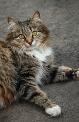striped street cat