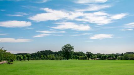 青空と芝生の公園