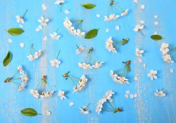 White flowers of cherry closeup