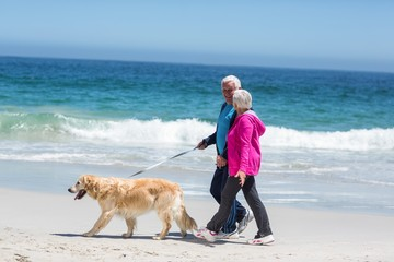 Cute mature couple walking their dog