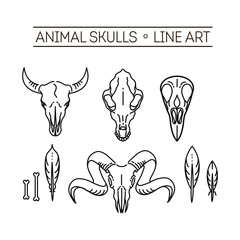 outline icon skull animals