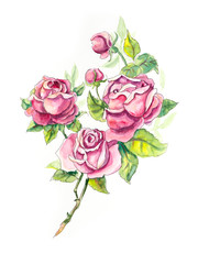 Roses brunch. Pattern from roses. Wedding drawings. Water color painting. Greeting cards. Roses background, watercolor composition. Flower backdrop.