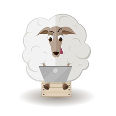 sheep with laptop