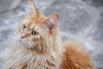 male cat (photo cat)