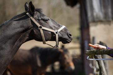 The feeding horses