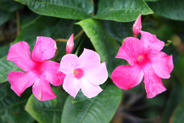 tropical colorful flower