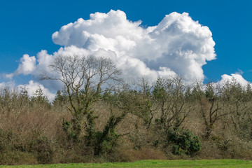Woodland and clouds