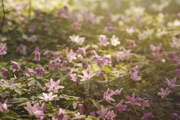 wild flowers carpet