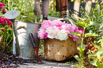 peonies in basket