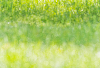 blurred background wet grass meadow dew sunlight bokeh