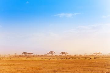 Big zebras herd in the distance of African savanna Wall mural
