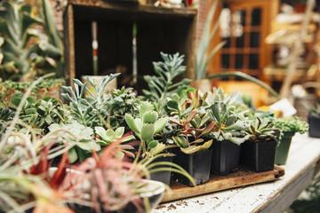 Succulent plants on table