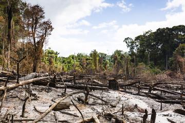 burned rainforest