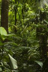 jungle trees and bush