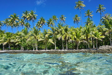 Untouched tropical shore with coconut trees seen from the water surface, Huahine island, Pacific ocean, French Polynesia