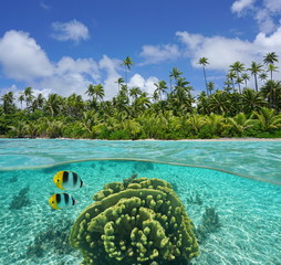Tropical shore with coconut trees of an islet and coral with fish underwater in the lagoon of Huahine, split view above and below water surface, Pacific ocean, French Polynesia