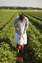 Mother and son picking strawberries in field
