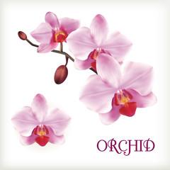 Orchid flowers set