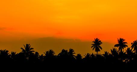 sky dawn coconut tree background