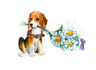 Beagle with flowers. Flower backdrop. Decoration with dog & flowers. Bouquet of  chamomile. Watercolor hand drawn illustration