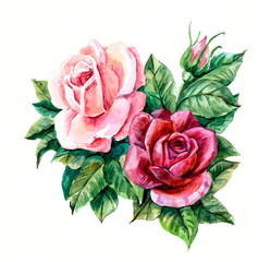 Two pink roses. Pattern from rose. Wedding drawings. Greeting cards. Rose background, watercolor composition. Flower backdrop.