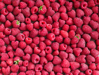 Raspberries. Close up, top view, high resolution product. Harvest Concept