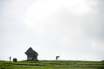Silhouette of farmer working in rural rice terrace