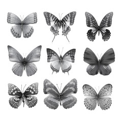 butterfly collection 03
