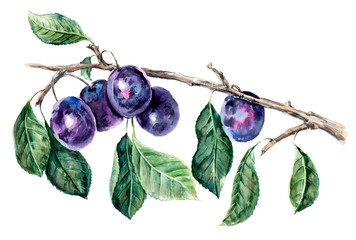 Branch with a plums. Pattern from plums. Fruit backdrop. Watercolor hand drawn illustration.