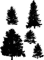 five fir tree silhouettes isolated on white