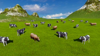 Wall Mural - Aerial view of a herd of dairy cows grazing on a green alpine pasture at sunny day. Mountains on the background. Sliding forward shot. Realistic 3D animation.