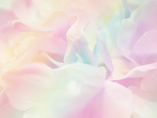 Flower background 38
