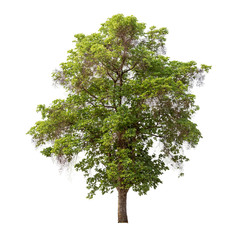 Isolated tree on white background with clipping path