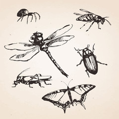 Set of hand-drawn insects. Vector isolated elements.