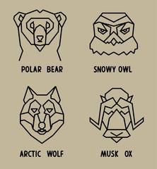 arctic  animals heads