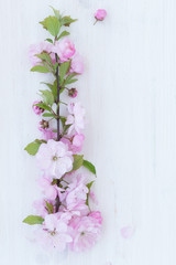 Foto op Canvas Bloemen Flowers close-up on white wooden background