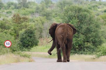 Elephant speed limit