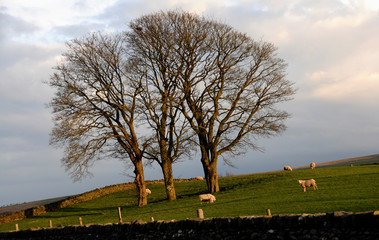 Late Evening Rural Scene In North Wales