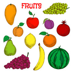 Ripe and fresh fruits colorful sketch symbol