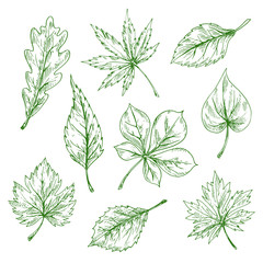 Green sketched leaves of forest and garden trees