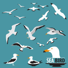 Set of Sea Bird and Seagull Vector