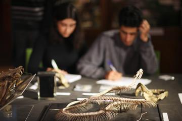Study of snake anatomy