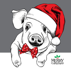 The christmas poster with the image pig portrait in Santa's hat and with bow. Vector illustration.