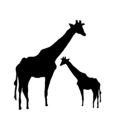 black giraffes silhouettes mother and his puppy  vectorisolated on white, silhouette di giraffe mamma col suo cucciolo vettoriale