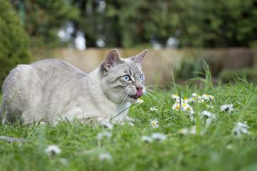 Katze im Garten.