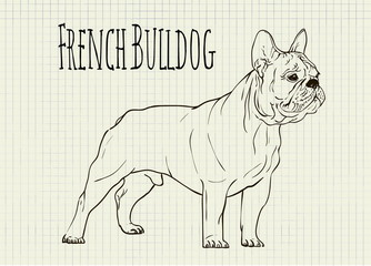 drawing on notebook sheet French Bulldog
