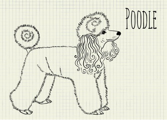 drawing on notebook sheet poodle